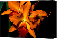 Orchidaceae Canvas Prints - Orchid 52 Canvas Print by Terry Elniski