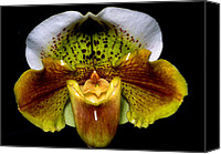 Orchidaceae Canvas Prints - Orchid 53 Canvas Print by Terry Elniski