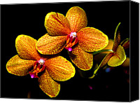 Orchidaceae Canvas Prints - Orchid 58 Canvas Print by Terry Elniski