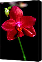 Orchidaceae Canvas Prints - Orchid 59 Canvas Print by Terry Elniski