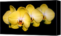 Orchidaceae Canvas Prints - Orchid 62 Canvas Print by Terry Elniski