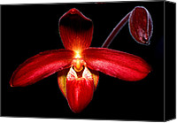 Orchidaceae Canvas Prints - Orchid 63 Canvas Print by Terry Elniski