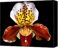 Orchidaceae Canvas Prints - Orchid 64 Canvas Print by Terry Elniski