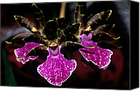 Orchidaceae Canvas Prints - Orchid 65 Canvas Print by Terry Elniski