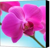 Tropical Photographs Canvas Prints - Orchid at the Ocean Closeup Canvas Print by Michi Sherwood