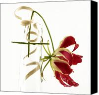 Indoors Inside Canvas Prints - Orchid Canvas Print by Bernard Jaubert
