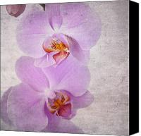 Parchment Canvas Prints - Orchid Canvas Print by Jane Rix