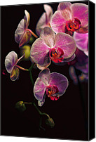 Orchidaceae Canvas Prints - Orchidaceae Gravitas Canvas Print by Bill Tiepelman