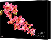 Beautiful Pink Flowers Canvas Prints - Orchids Canvas Print by Cheryl Young
