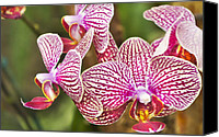 Mariola Szeliga Canvas Prints - Orchids in the Arboretum Canvas Print by Mariola Szeliga