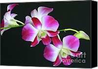 Delicate Bloom Canvas Prints - Orchids Canvas Print by Sabrina L Ryan