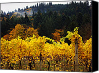 Kansas City Canvas Prints - Oregon Autumn Vineyards Canvas Print by Glenna McRae