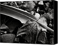 Pebbles Photo Canvas Prints - Out Of Context Canvas Print by Odd Jeppesen