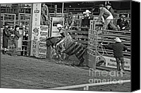 Bulls Photo Canvas Prints - Out Of The Chute Canvas Print by Shawn Naranjo