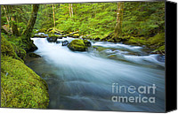 Rainforest Canvas Prints - Out of the Rainforest Canvas Print by Mike  Dawson