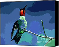 Male Hummingbird Canvas Prints - Out on a Limb - Blue Canvas Print by Al Powell Photography USA
