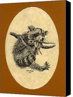 Raccoon Drawings Canvas Prints - Out on a Limb Canvas Print by Karen Musick