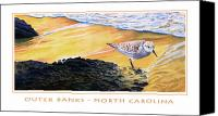 Sunset Mixed Media Canvas Prints - Outer Banks Sanderling Canvas Print by Bob Nolin