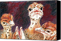 Ostrich Pastels Canvas Prints - Outsdoorn Babes Canvas Print by Vicki Ross
