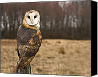 Animal Portrait Canvas Prints - Owl Looking At Camera Canvas Print by Jody Trappe Photography