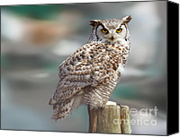 Barred Owl Canvas Prints - Owl Love Canvas Print by David  Naman
