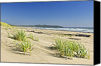 Dunes Canvas Prints - Pacific ocean shore on Vancouver Island Canvas Print by Elena Elisseeva