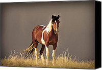 Wild Horses Canvas Prints - Paint Filly Sepia Sky Canvas Print by Rich Franco