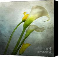 Nostalgic Digital Art Canvas Prints - Painted Arum Canvas Print by Bernard Jaubert