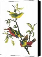 Bunting Painting Canvas Prints - Painted Bunting Canvas Print by John James Audubon