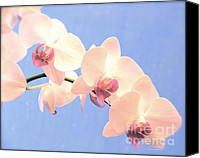 Flower Prints Greeting Cards Canvas Prints - Painted Orchid  Canvas Print by Christopher  Ward