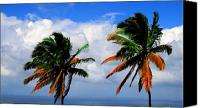 Potography Canvas Prints - Painted Palm trees Canvas Print by Perry Webster