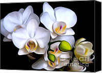 Painterly Orchids Canvas Prints - Painterly Orchids Canvas Print by Barbara Dawson
