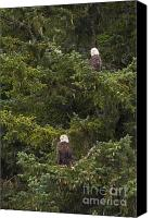 Eagle Watching Canvas Prints - Pair of Bald Eagles Canvas Print by Darcy Michaelchuk