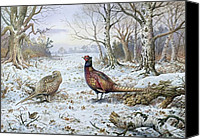 Pheasant Painting Canvas Prints - Pair of Pheasants with a Wren Canvas Print by Carl Donner