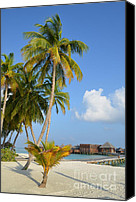 Trees Special Promotions - Palm Paradise Canvas Print by Corinne Rhode