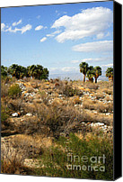 Fine Photography Art Canvas Prints - Palm Springs Indian Canyons View  Canvas Print by Ben and Raisa Gertsberg