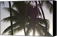 Honolulu Photo Canvas Prints - Palm Tree Fronds In Honolulu Canvas Print by Stacy Gold