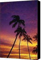 Selection Canvas Prints - Palm Tree Silhouettes, Sunset, Waikiki Canvas Print by Natural Selection Craig Tuttle