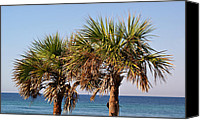 Panama City Beach Photo Canvas Prints - Palm Trees Canvas Print by Sandy Keeton