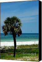Panama City Beach Fl Canvas Prints - Palmetto and the Beach Canvas Print by Susanne Van Hulst