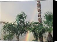 Day Lillies Photo Canvas Prints - Palms and Rainbow Canvas Print by Russ Bertlow