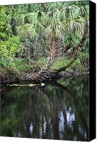 Treescape Canvas Prints - Palms on the River Canvas Print by Carolyn Marshall