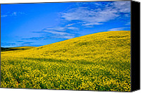 Rapeseed Canvas Prints - Palouse Canola Fields Canvas Print by David Patterson