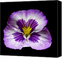 Flower Works Canvas Prints - Pansy. Canvas Print by Chris  Kusik