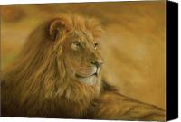 Animal Pastels Canvas Prints - Panthera Leo - Lion - Monarch of the Animal Kingdom Canvas Print by Steven Paul Carlson
