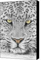 Close Up Mixed Media Canvas Prints - Panthera Pardus - Leopard close-up Canvas Print by Steven Paul Carlson