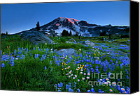 Aster Canvas Prints - Paradise Garden Dawning Canvas Print by Mike  Dawson