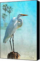 Great Egret Canvas Prints - Paradise Lost Canvas Print by Betty LaRue