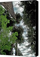 Tall Trees Canvas Prints - Paradise to lovers of big trees - Olympic National Park WA Canvas Print by Christine Till