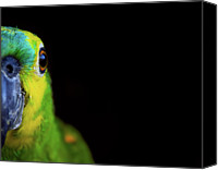Parrot Canvas Prints - Parrot Canvas Print by by Marcio Anderson